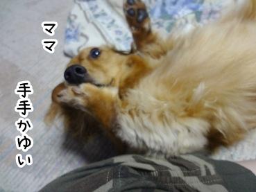 kinako321.jpg
