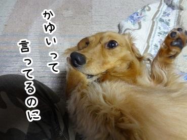 kinako324.jpg
