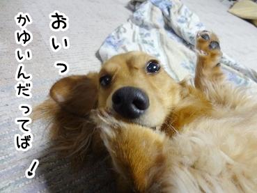 kinako325.jpg