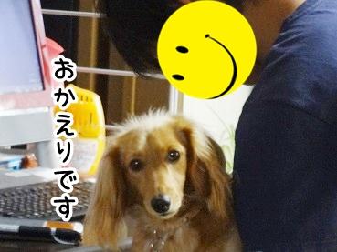 kinako327.jpg