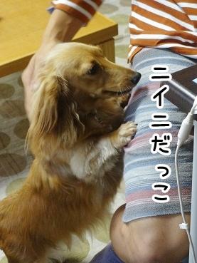 kinako328.jpg