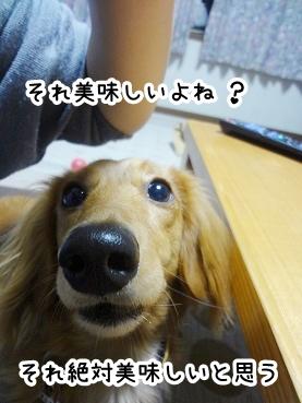 kinako338.jpg