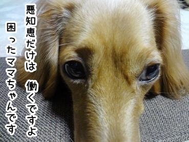 kinako343.jpg
