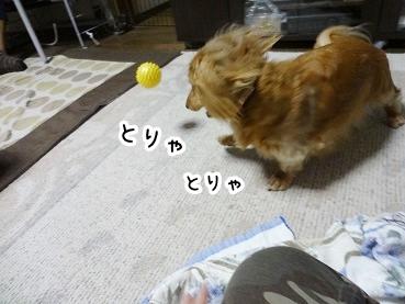 kinako347.jpg