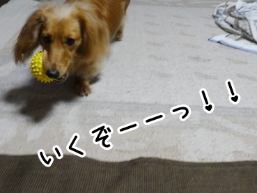 kinako349.jpg