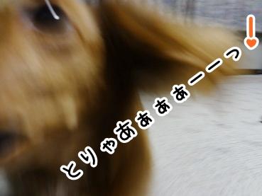 kinako352.jpg