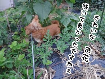 kinako358.jpg