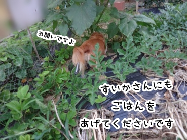 kinako359.jpg