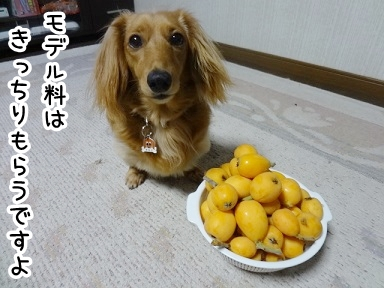 kinako363.jpg