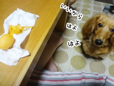 kinako364.jpg