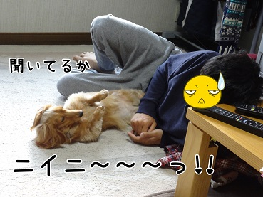 kinako37.jpg