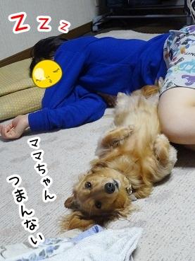 kinako370.jpg