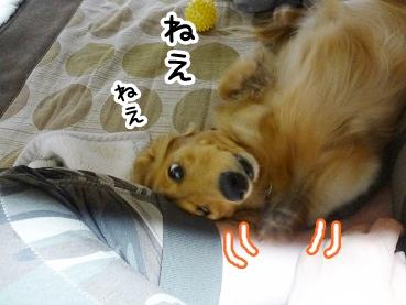 kinako373.jpg