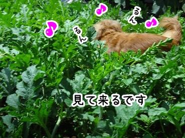 kinako387.jpg