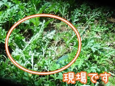 kinako388.jpg