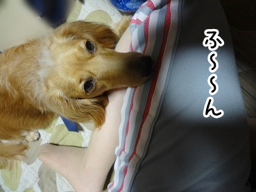 kinako389.jpg