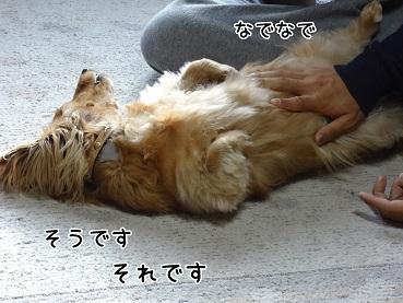 kinako39.jpg