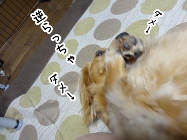 kinako391.jpg
