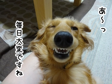 kinako393.jpg