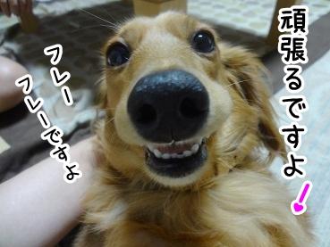 kinako395.jpg