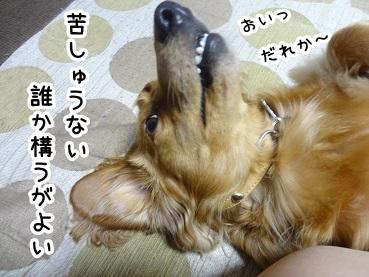 kinako397.jpg