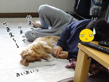 kinako40.jpg