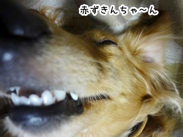 kinako400.jpg