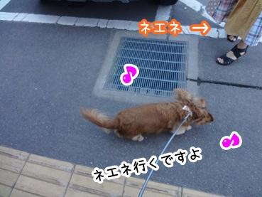 kinako401.jpg