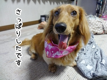 kinako404.jpg