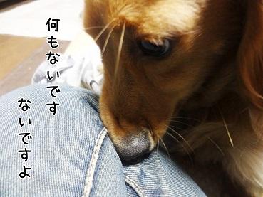 kinako41.jpg
