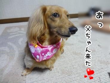kinako413.jpg