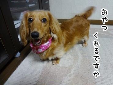 kinako414.jpg