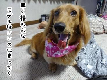 kinako415.jpg