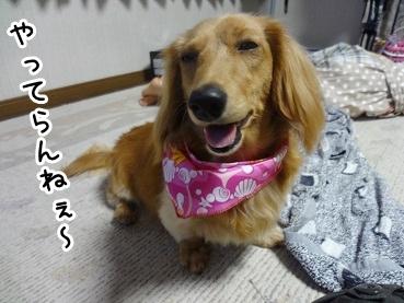 kinako416.jpg