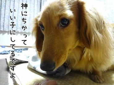 kinako42.jpg
