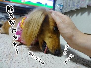 kinako424.jpg