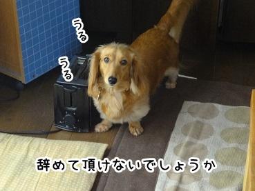 kinako429.jpg