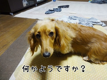 kinako43.jpg