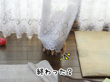 kinako431.jpg