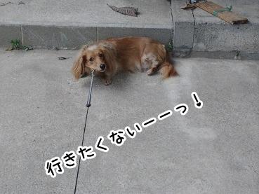 kinako433.jpg
