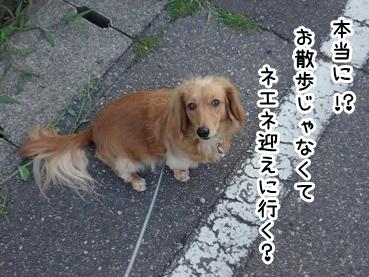 kinako434.jpg