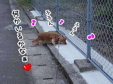 kinako435.jpg