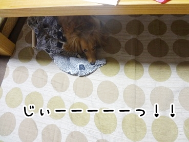 kinako439.jpg