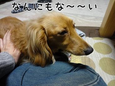kinako44.jpg