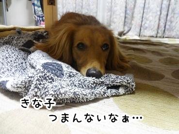 kinako441.jpg
