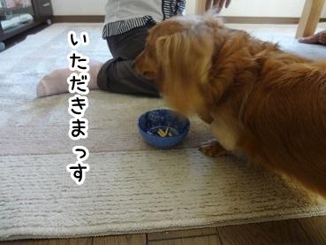 kinako452.jpg