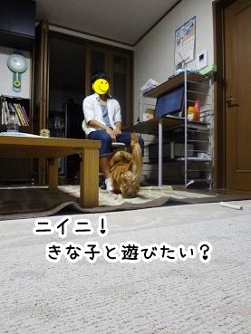 kinako456.jpg