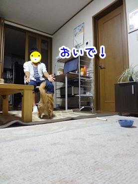 kinako457.jpg