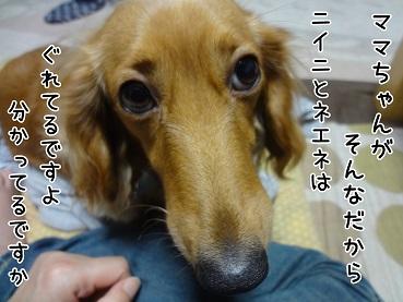 kinako46.jpg