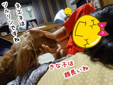 kinako460.jpg